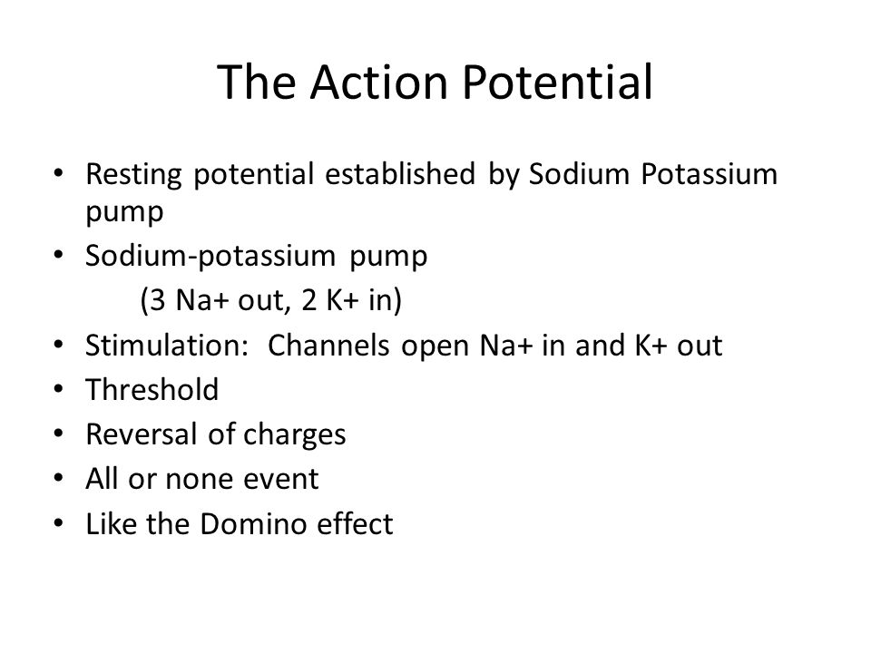 The Action Potential Resting potential established by Sodium Potassium pump Sodium-potassium pump (3 Na+ out, 2 K+ in) Stimulation: Channels open Na+