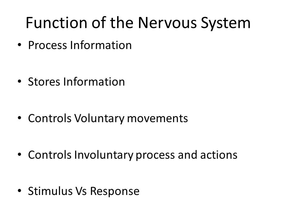 Function of the Nervous System Process Information Stores Information Controls Voluntary movements Controls Involuntary process and actions Stimulus V