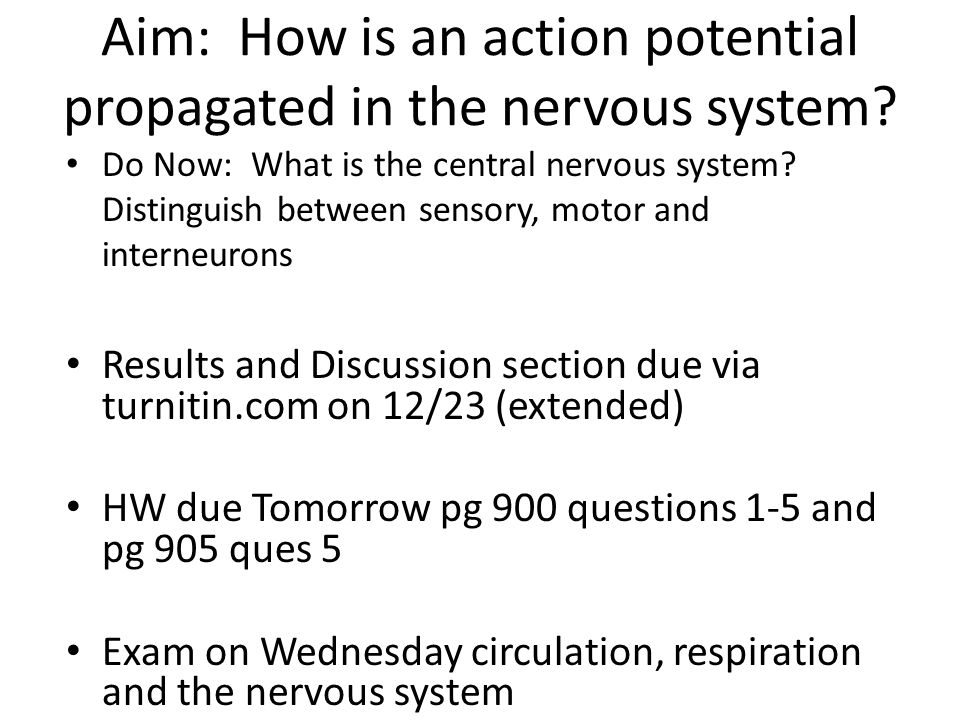 Aim: How is an action potential propagated in the nervous system? Do Now: What is the central nervous system? Distinguish between sensory, motor and i