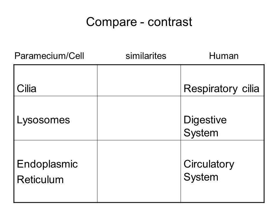 Compare - contrast CiliaRespiratory cilia LysosomesDigestive System Endoplasmic Reticulum Circulatory System Paramecium/CellsimilaritesHuman
