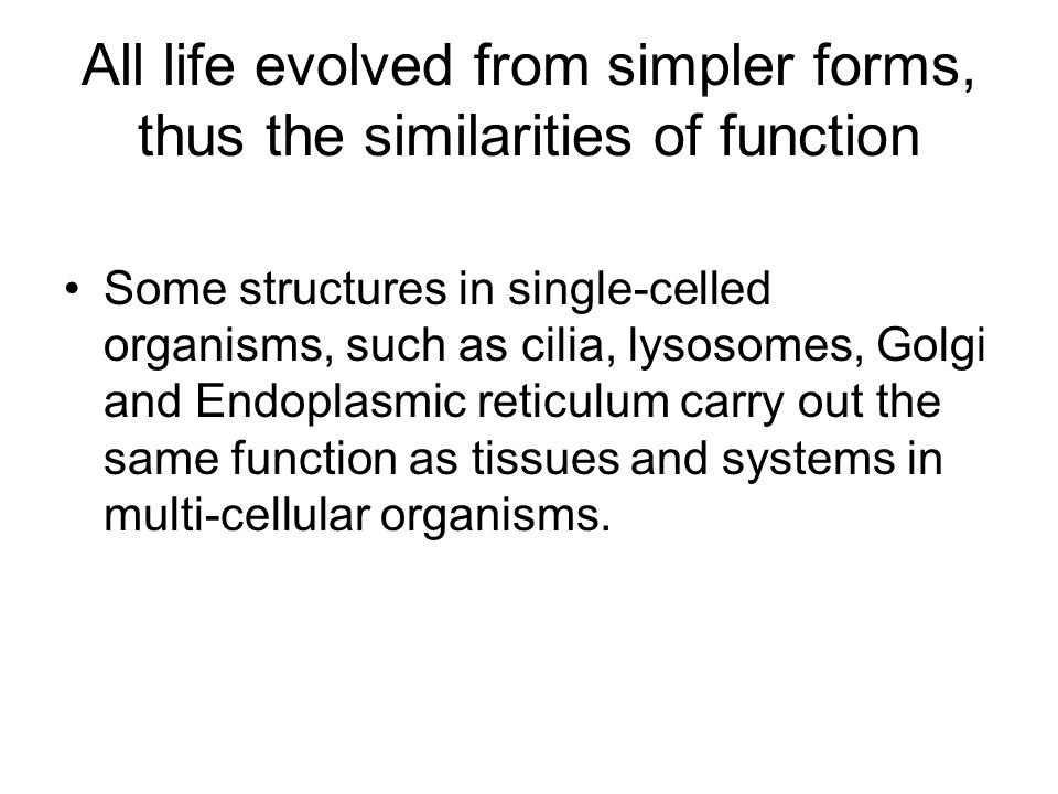All life evolved from simpler forms, thus the similarities of function Some structures in single-celled organisms, such as cilia, lysosomes, Golgi and Endoplasmic reticulum carry out the same function as tissues and systems in multi-cellular organisms.