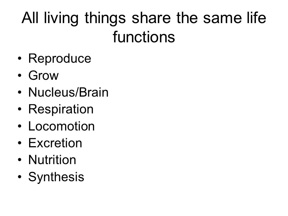 All living things share the same life functions Reproduce Grow Nucleus/Brain Respiration Locomotion Excretion Nutrition Synthesis