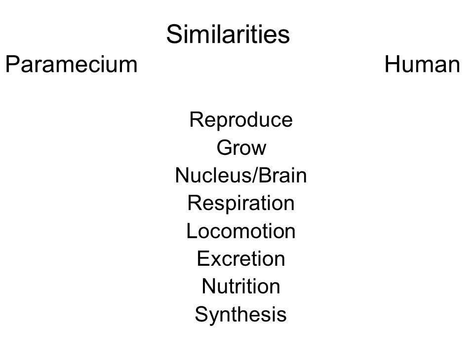 Similarities ParameciumHuman Reproduce Grow Nucleus/Brain Respiration Locomotion Excretion Nutrition Synthesis