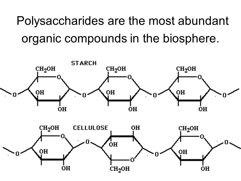 Polysaccharides are the most abundant organic compounds in the biosphere.