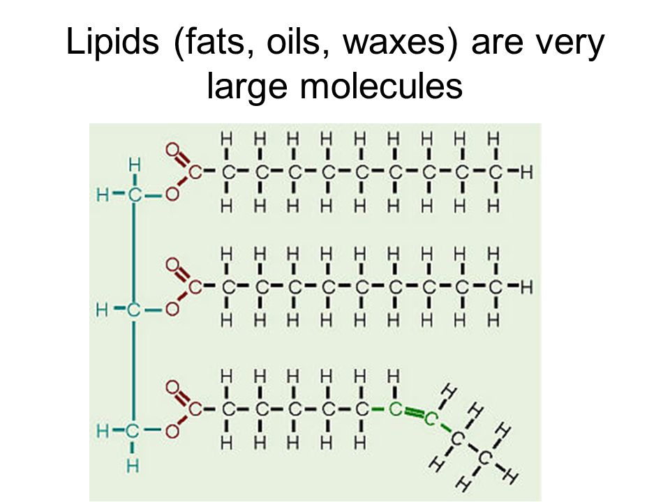Lipids (fats, oils, waxes) are very large molecules