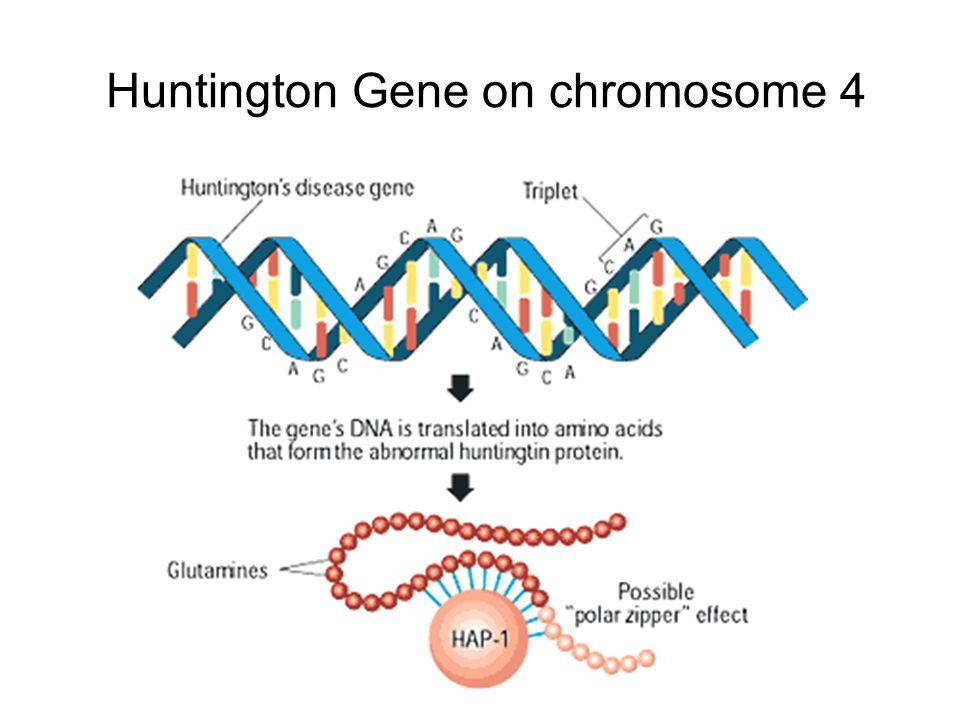 Huntington Gene on chromosome 4