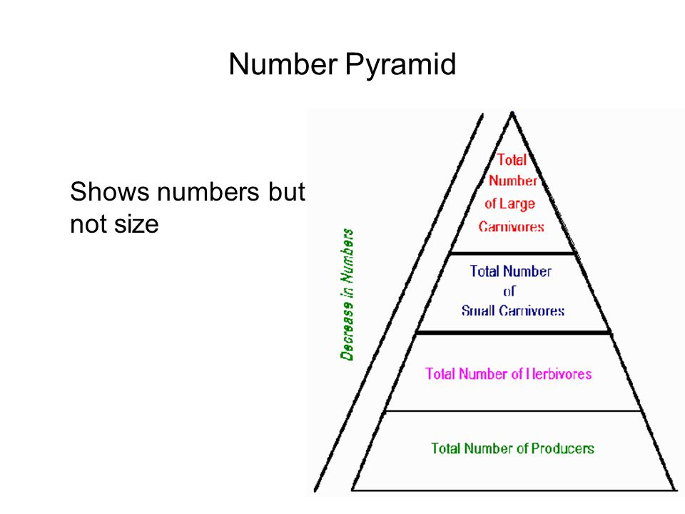 Number Pyramid Shows numbers but not size