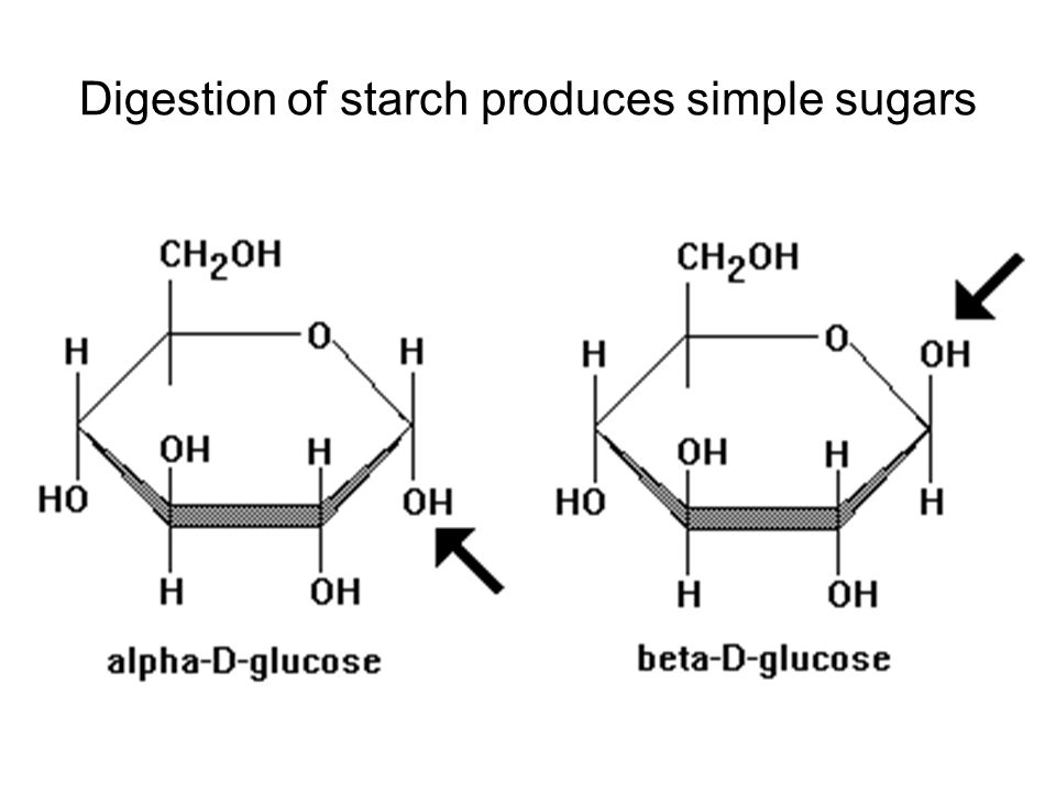 Digestion of starch produces simple sugars