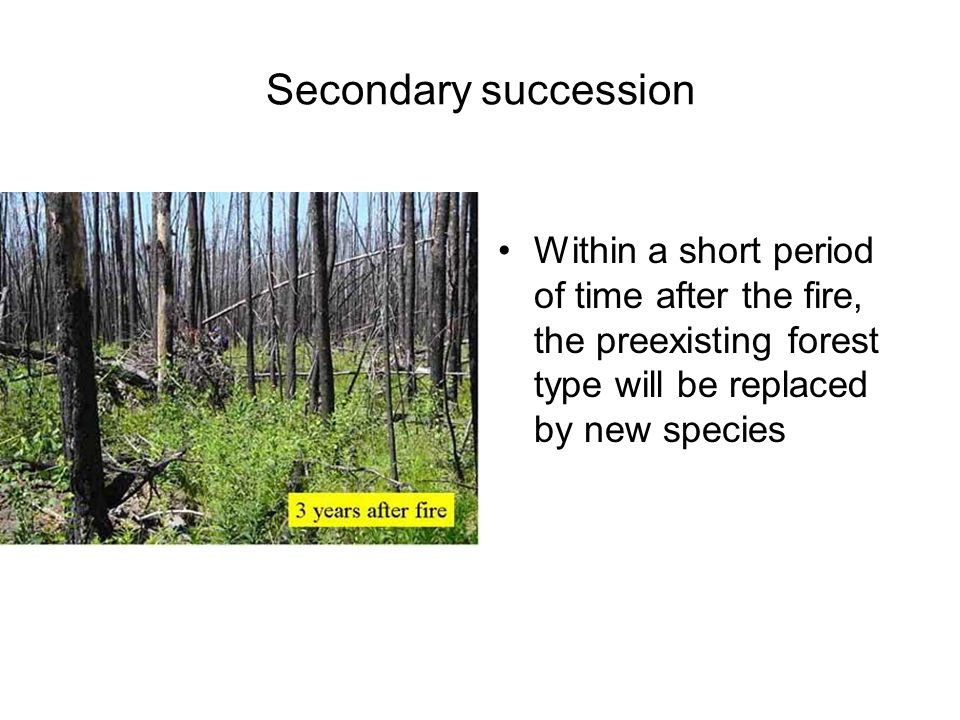 Secondary succession Within a short period of time after the fire, the preexisting forest type will be replaced by new species