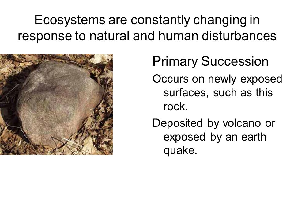 Ecosystems are constantly changing in response to natural and human disturbances Primary Succession Occurs on newly exposed surfaces, such as this rock.