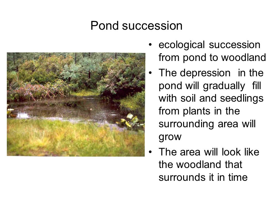Pond succession ecological succession from pond to woodland The depression in the pond will gradually fill with soil and seedlings from plants in the surrounding area will grow The area will look like the woodland that surrounds it in time