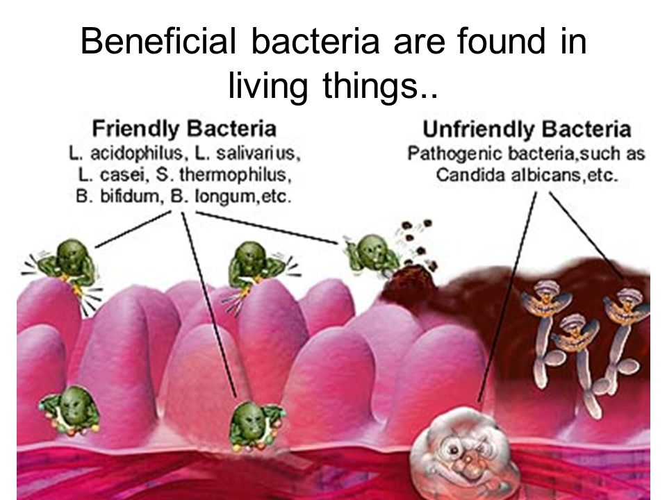 Beneficial Intestinal Bacteria Some benefits of PROBIOTICS augments the immune system alleviates anxiety prevents arterial disease, lowering cholesterol prevents and controls diarrhea inhibits food pathogens and enhances food preservation inhibits tumors and carcinogenesis fights fungal/yeast/candida infections promotes/aids liver function and detoxification produces natural antibiotic-like agents that fight and prevent bacterial infections prevents osteoporosis and promotes longevity