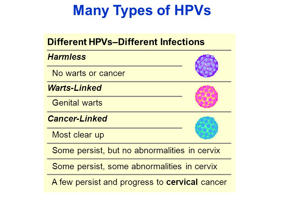 Many Types of HPVs Different HPVs–Different Infections Harmless No warts or cancer Warts-Linked Genital warts Cancer-Linked Most clear up Some persist, but no abnormalities in cervix Some persist, some abnormalities in cervix A few persist and progress to cervical cancer