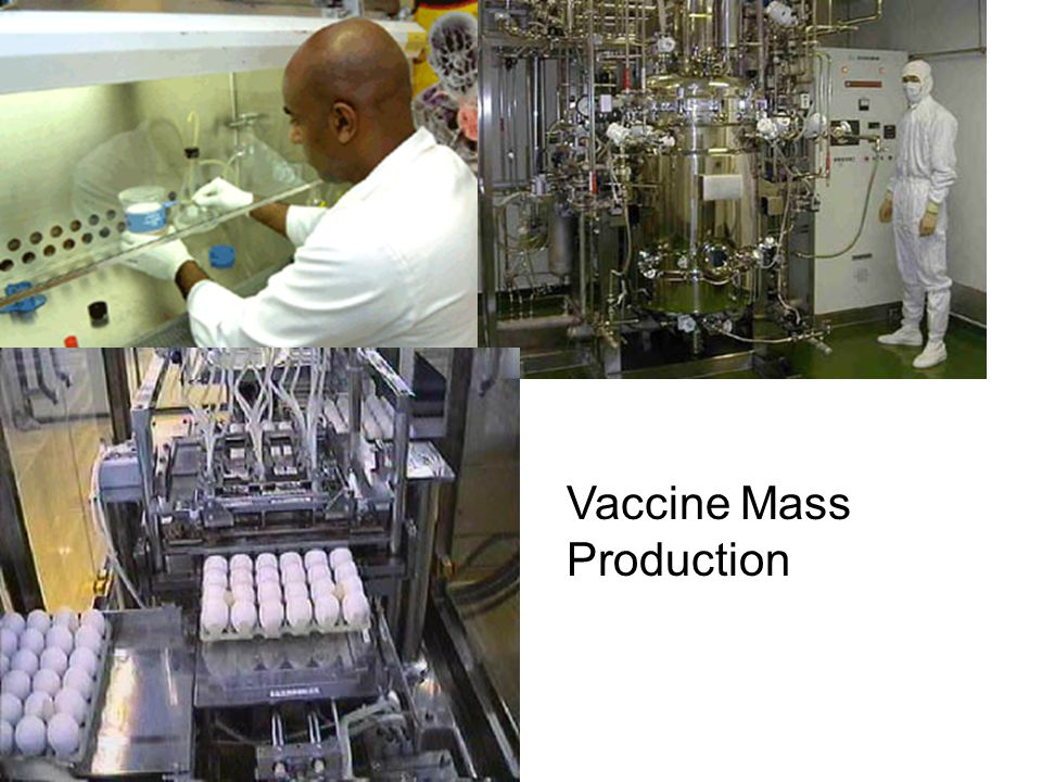 Vaccine Mass Production