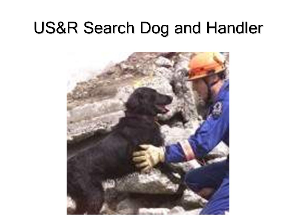 US&R Search Dog and Handler