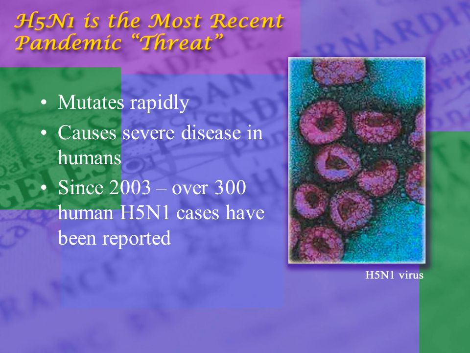 Mutates rapidly Causes severe disease in humans Since 2003 – over 300 human H5N1 cases have been reported