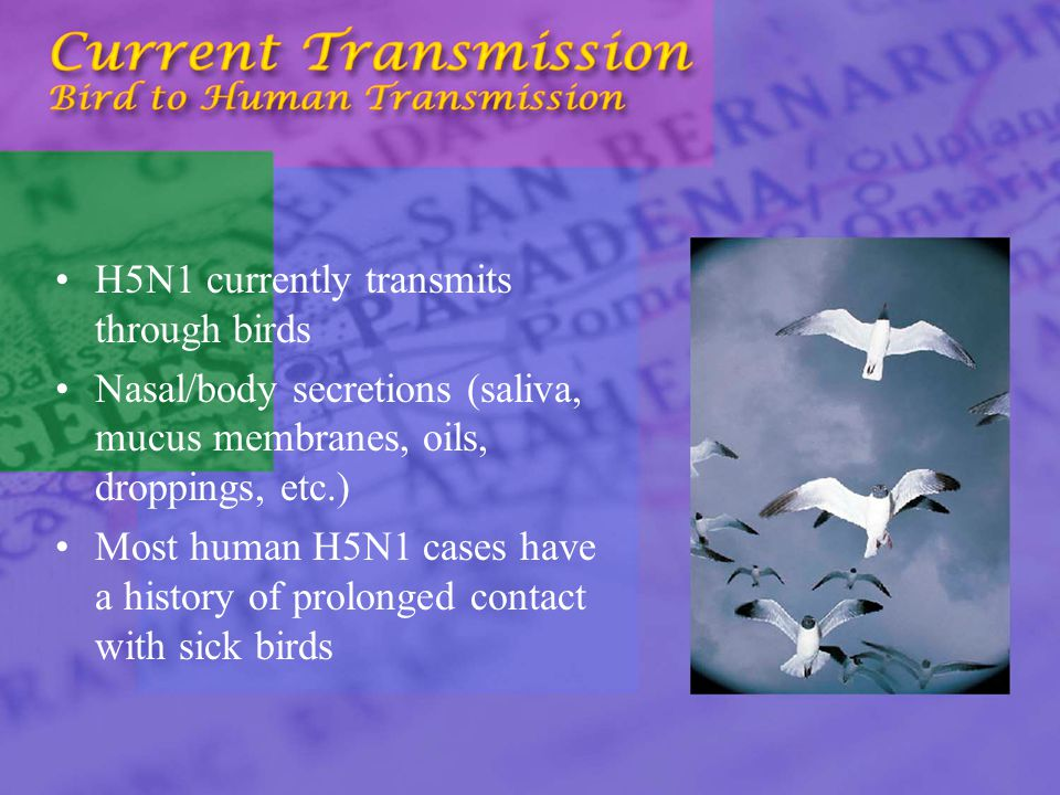 H5N1 currently transmits through birds Nasal/body secretions (saliva, mucus membranes, oils, droppings, etc.) Most human H5N1 cases have a history of prolonged contact with sick birds