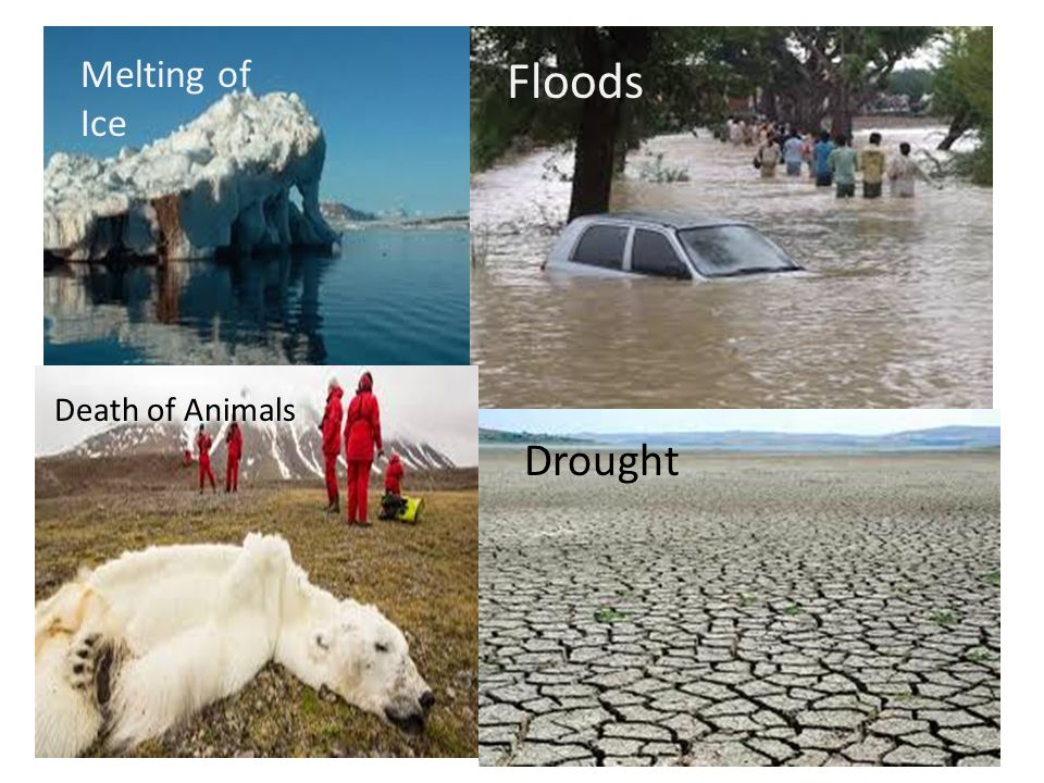 Floods Melting of Ice Death of Animals Drought