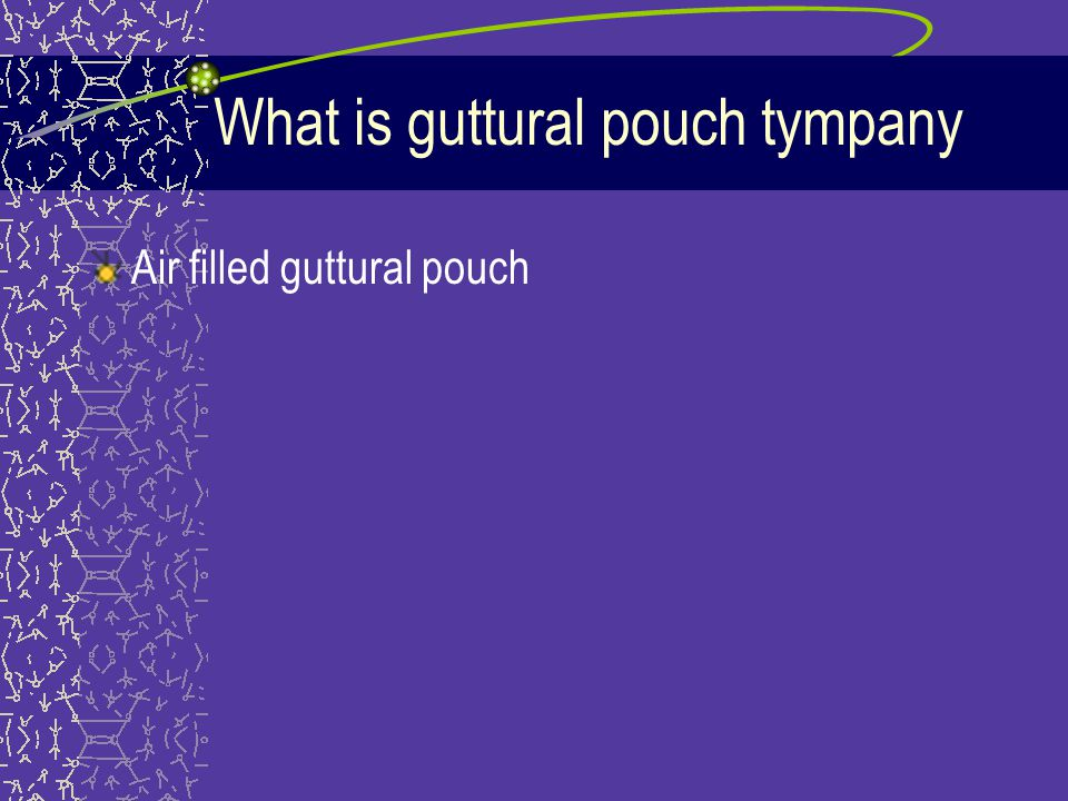 What is guttural pouch tympany Air filled guttural pouch