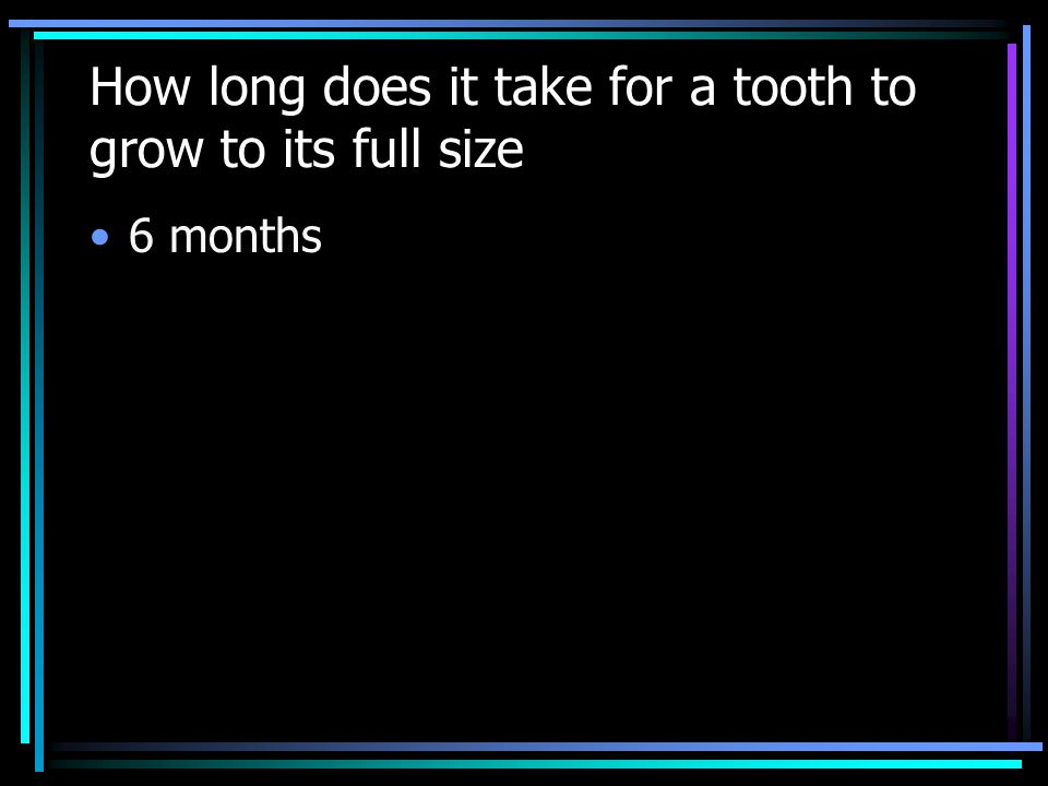 How long does it take for a tooth to grow to its full size 6 months