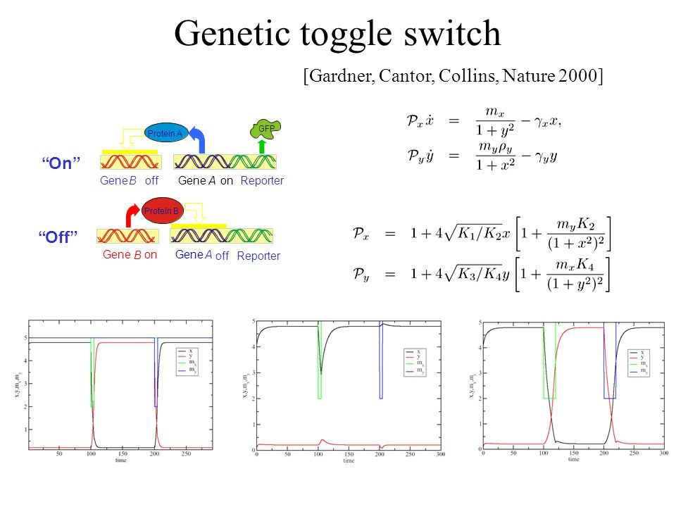 Genetic toggle switch [Gardner, Cantor, Collins, Nature 2000] Gene AonGene B offReporter GFP Protein A Gene A off Gene B on Reporter Protein B On Off