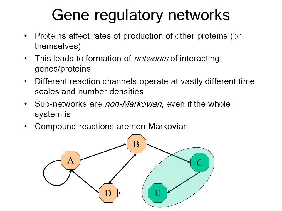 Gene regulatory networks Proteins affect rates of production of other proteins (or themselves) This leads to formation of networks of interacting genes/proteins Different reaction channels operate at vastly different time scales and number densities Sub-networks are non-Markovian, even if the whole system is Compound reactions are non-Markovian A B C DE A B D