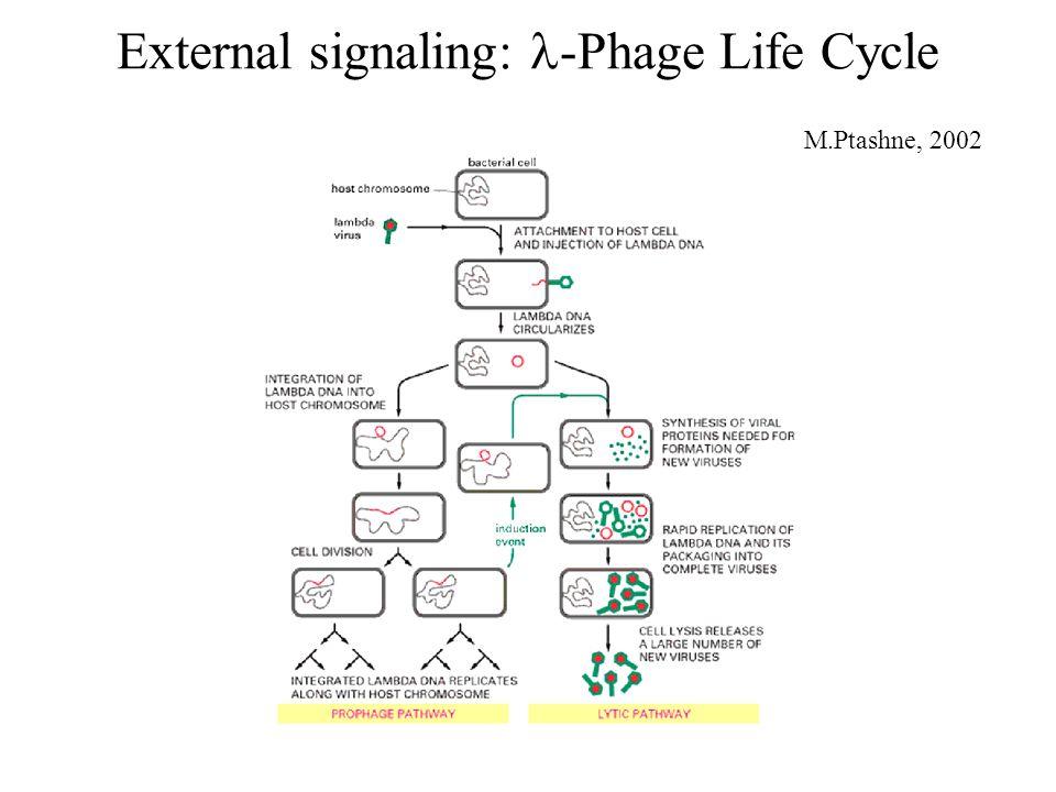 External signaling: -Phage Life Cycle M.Ptashne, 2002