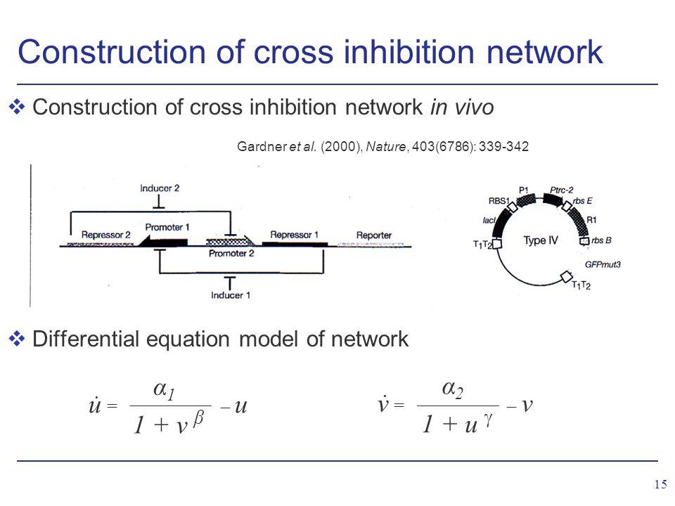 15 Construction of cross inhibition network vConstruction of cross inhibition network in vivo vDifferential equation model of network u = – u 1 + v β α1α1 v = – v 1 + u  α2α2..