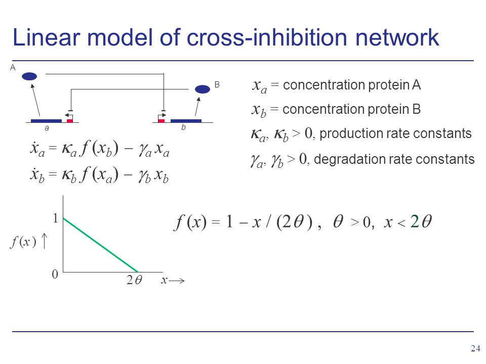 24 Linear model of cross-inhibition network x a = concentration protein A x b = concentration protein B  a,  b > 0, production rate constants  a,  b > 0, degradation rate constants x a =  a f (x b )   a x a x b =  b f (x a )   b x b..