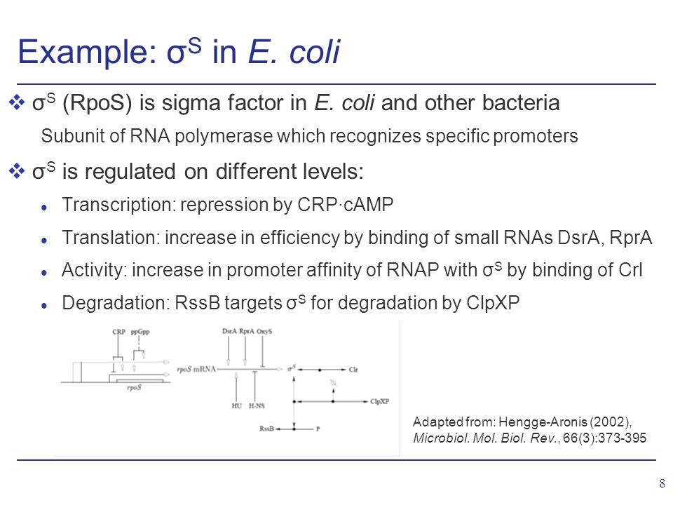 8 Example: σ S in E. coli vσ S (RpoS) is sigma factor in E.