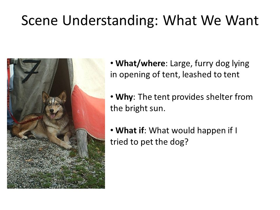 Scene Understanding: What We Want What/where: Large, furry dog lying in opening of tent, leashed to tent Why: The tent provides shelter from the bright sun.