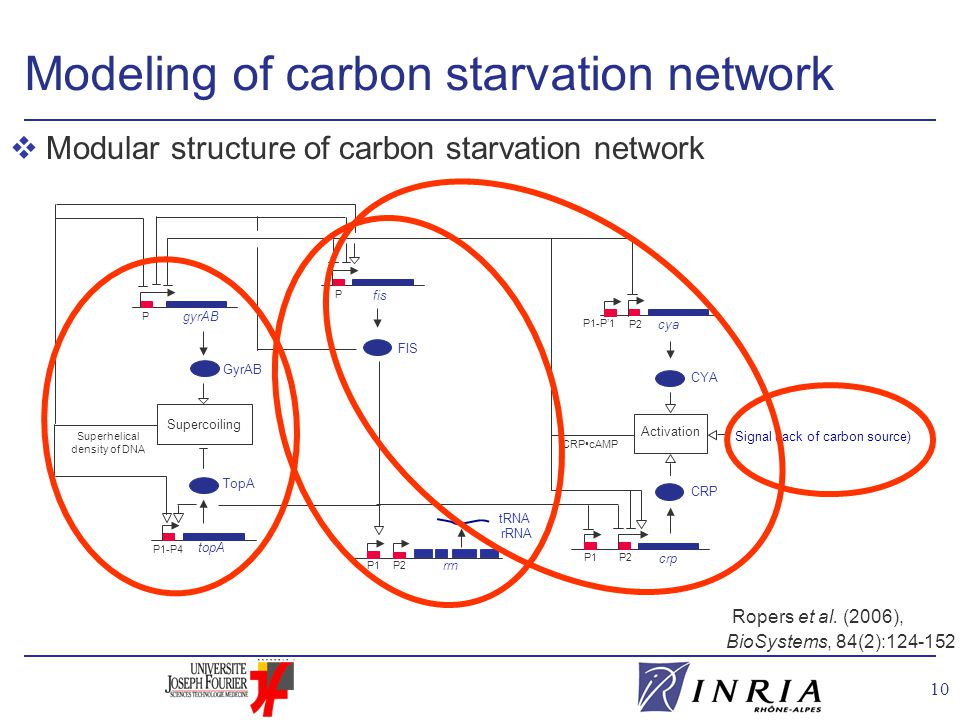 10 vModular structure of carbon starvation network Ropers et al. (2006), BioSystems, 84(2):124-152 Modeling of carbon starvation network