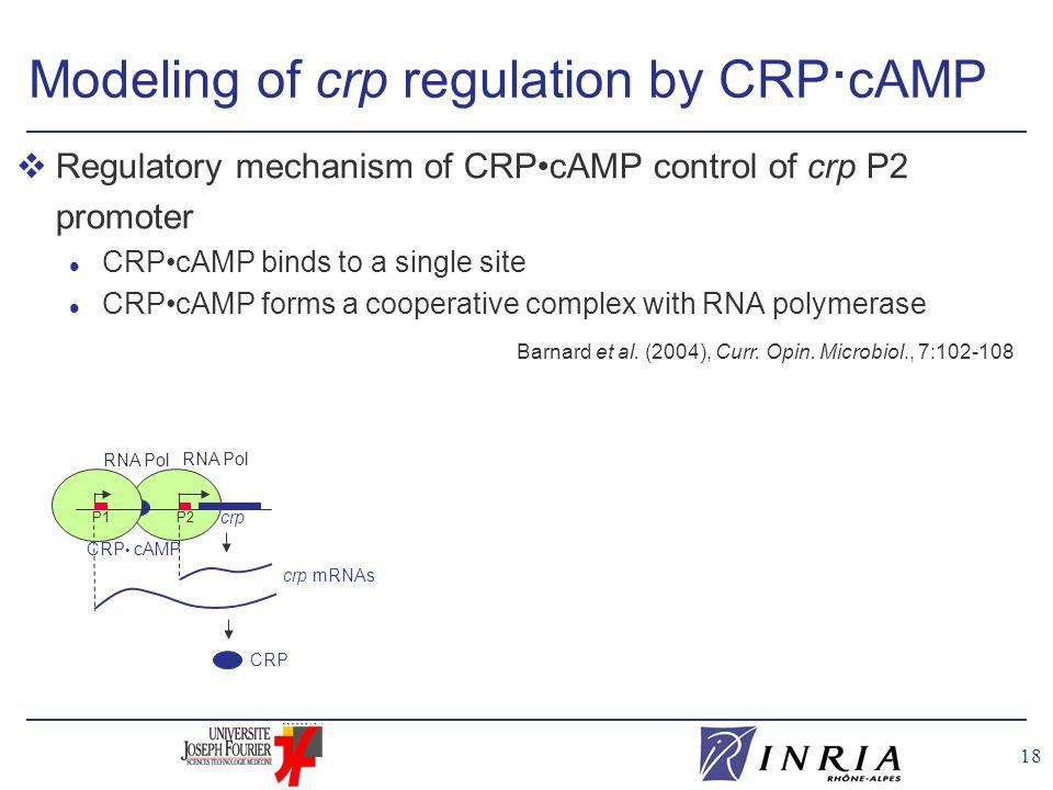 18 CRP cAMP RNA Pol Modeling of crp regulation by CRP · cAMP Barnard et al.