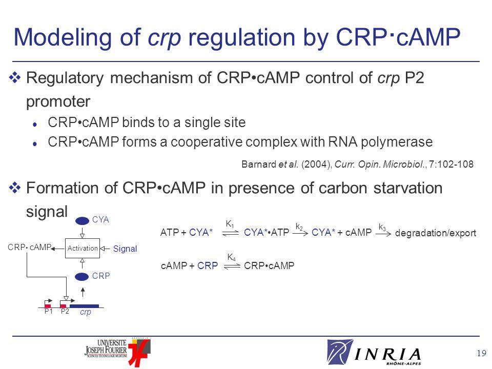 19 Modeling of crp regulation by CRP · cAMP Barnard et al.