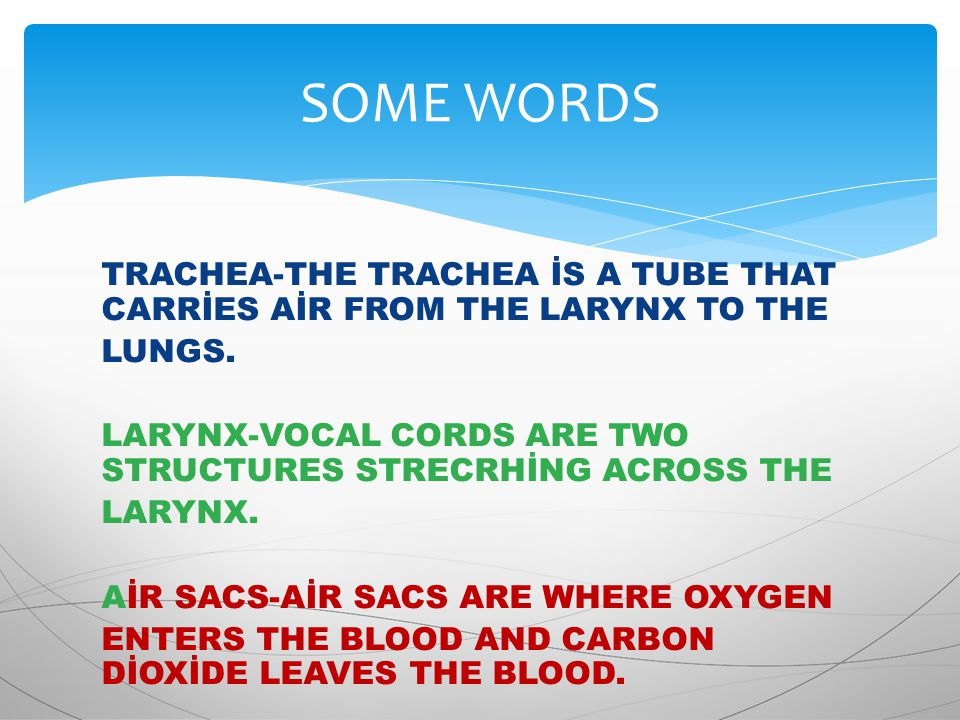 TRACHEA-THE TRACHEA İS A TUBE THAT CARRİES AİR FROM THE LARYNX TO THE LUNGS.