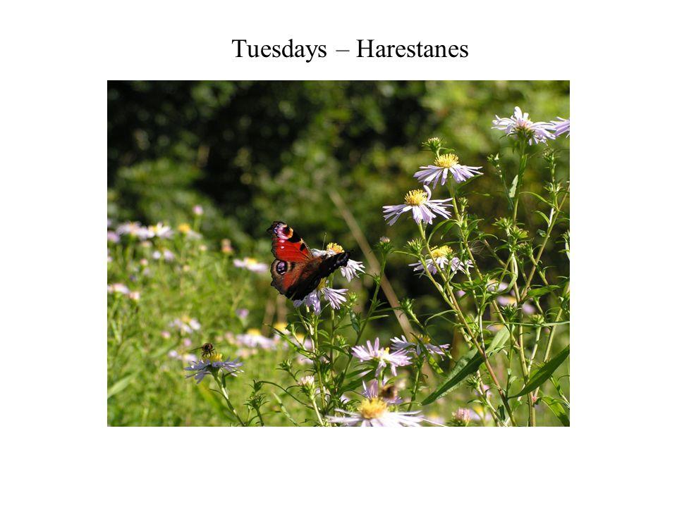 Tuesdays – Harestanes