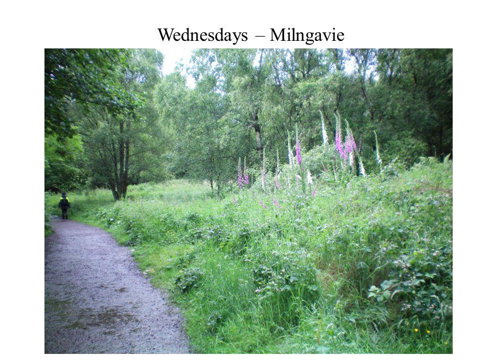 Wednesdays – Milngavie