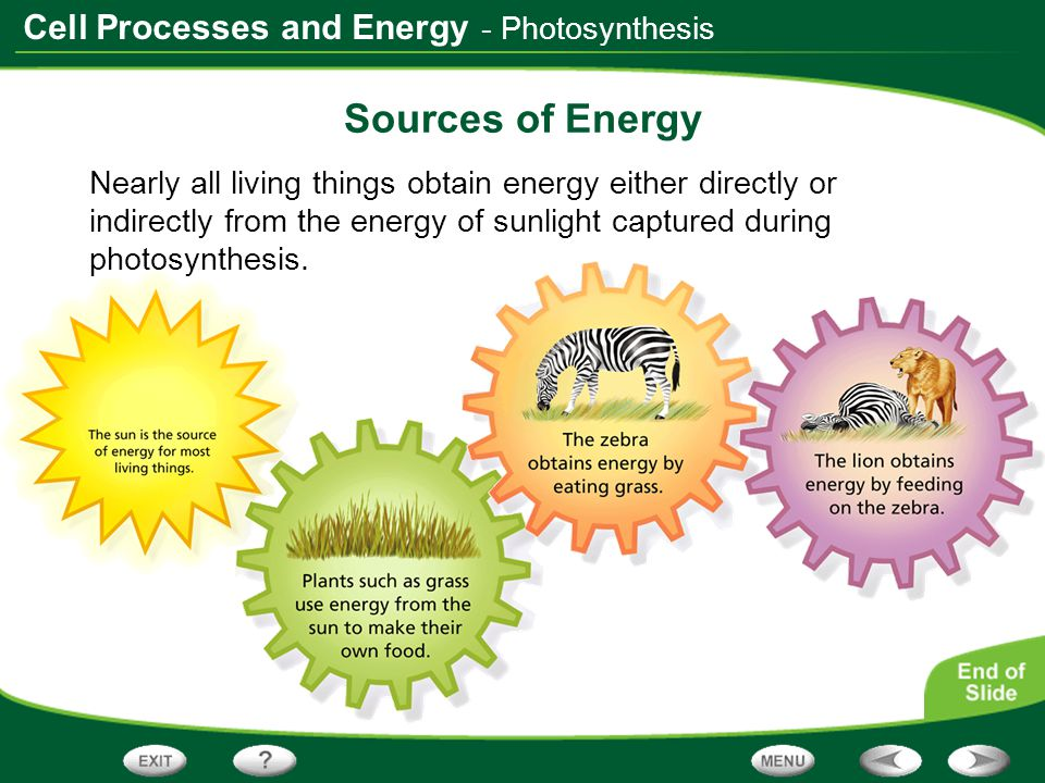 Cell Processes and Energy - Photosynthesis Sources of Energy Nearly all living things obtain energy either directly or indirectly from the energy of s