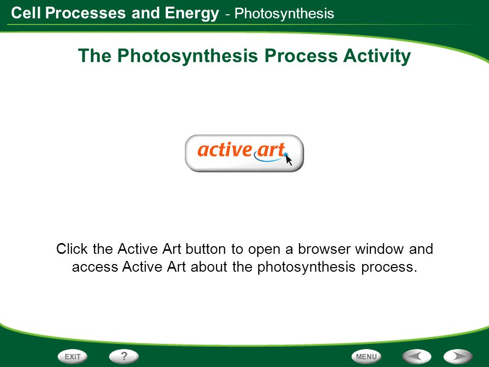 Cell Processes and Energy The Photosynthesis Process Activity Click the Active Art button to open a browser window and access Active Art about the pho