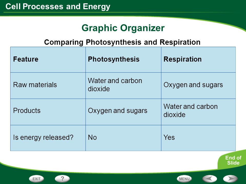 Cell Processes and Energy Graphic Organizer Comparing Photosynthesis and Respiration Feature Oxygen and sugars PhotosynthesisRespiration Raw materials