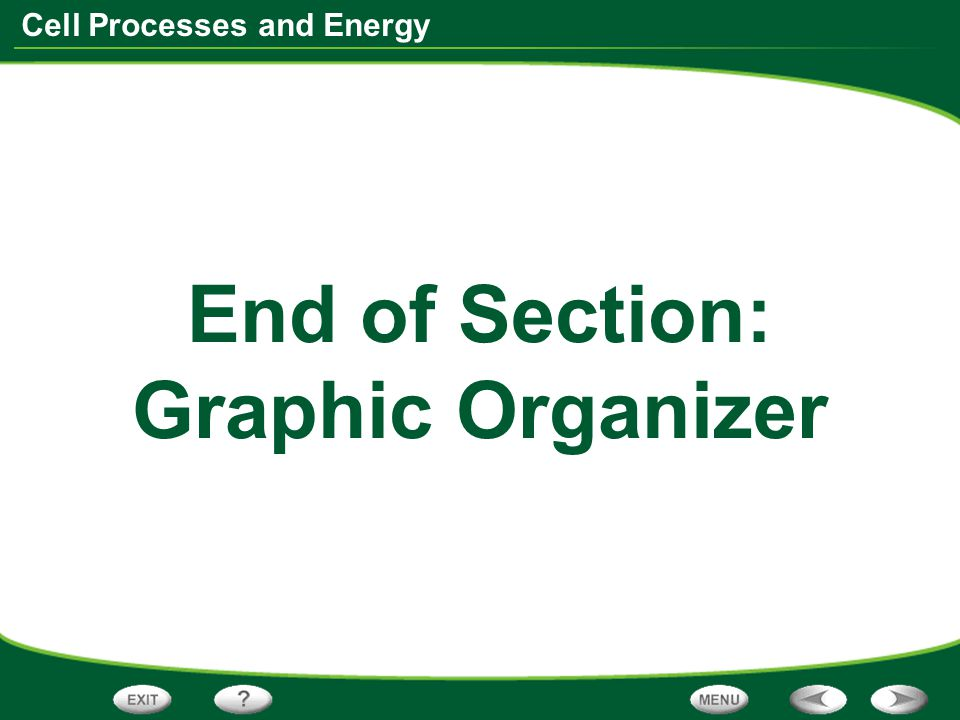 Cell Processes and Energy End of Section: Graphic Organizer