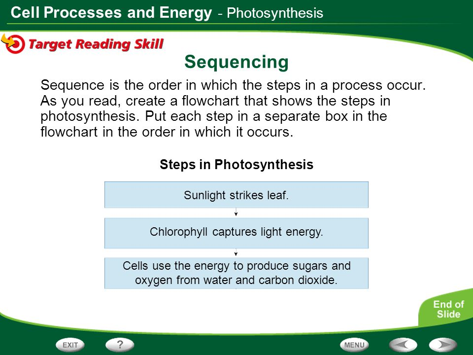 Cell Processes and Energy Sequencing Sequence is the order in which the steps in a process occur. As you read, create a flowchart that shows the steps