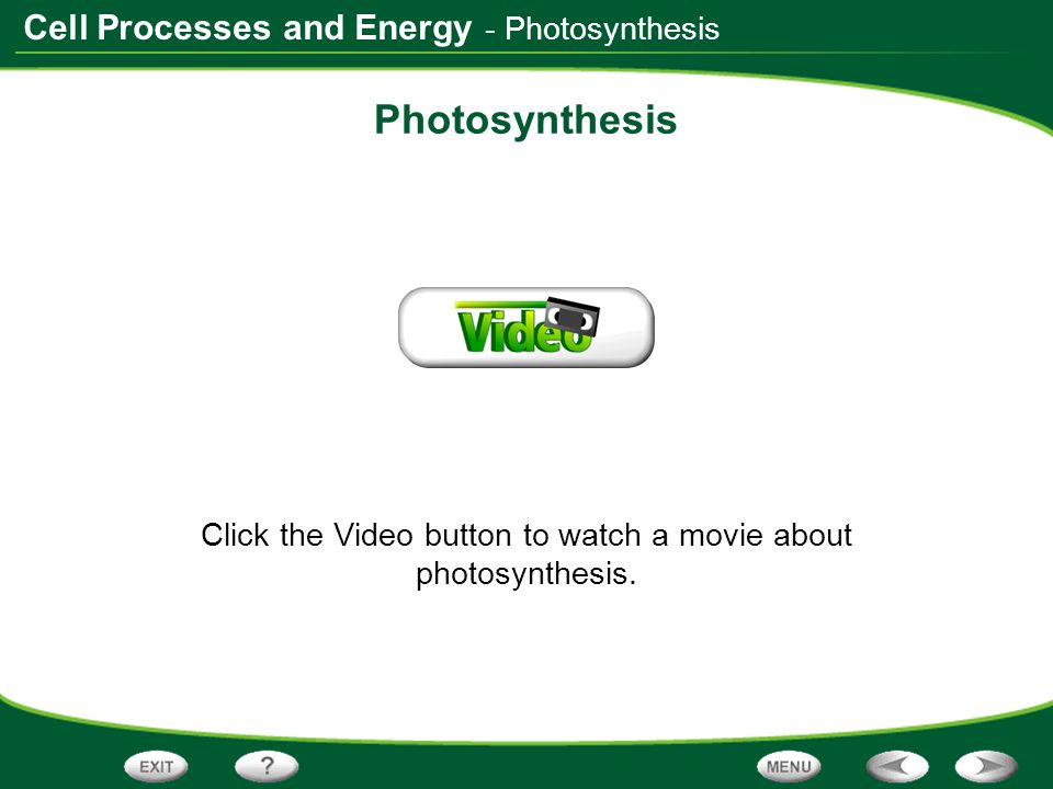 Cell Processes and Energy Photosynthesis Click the Video button to watch a movie about photosynthesis. - Photosynthesis