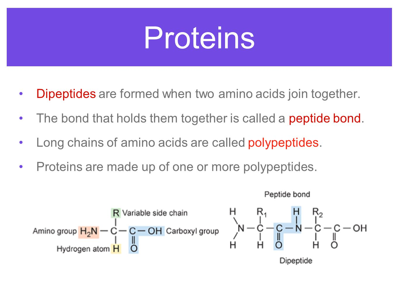 Proteins Dipeptides are formed when two amino acids join together. The bond that holds them together is called a peptide bond. Long chains of amino ac