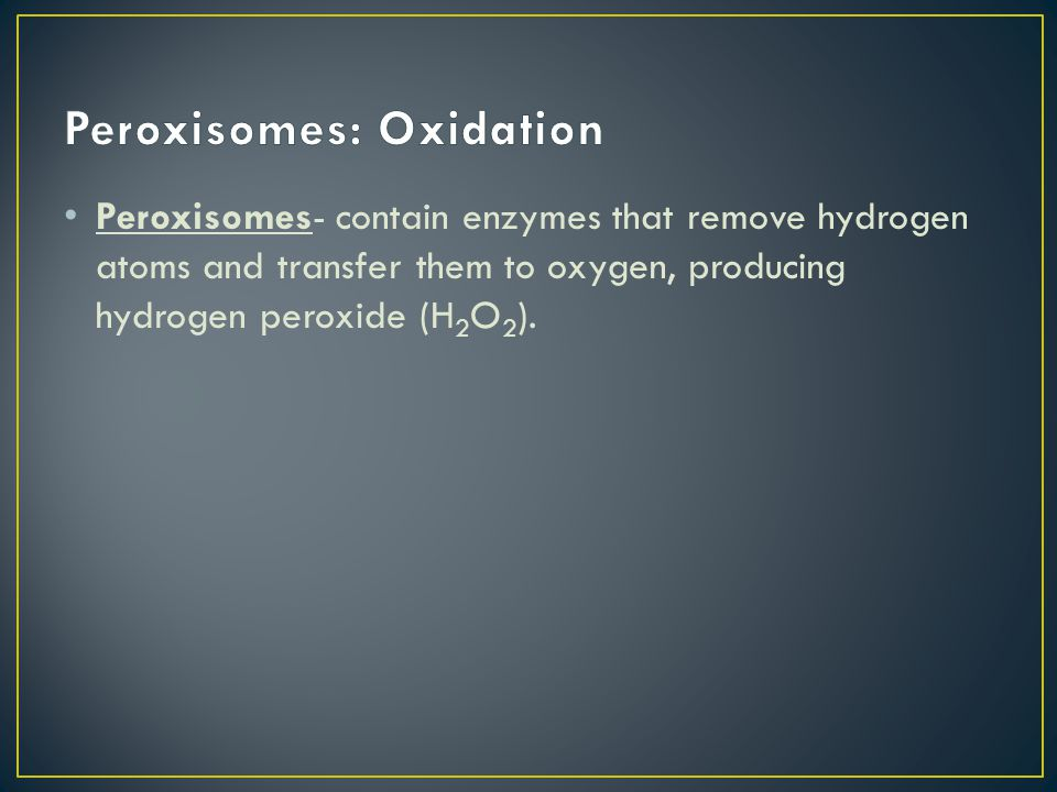 Peroxisomes- contain enzymes that remove hydrogen atoms and transfer them to oxygen, producing hydrogen peroxide (H 2 O 2 ).