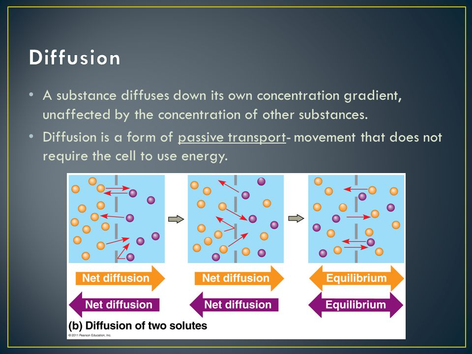 A substance diffuses down its own concentration gradient, unaffected by the concentration of other substances. Diffusion is a form of passive transpor