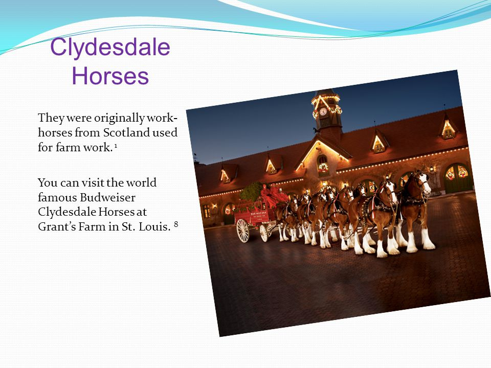 Clydesdale Horses They were originally work- horses from Scotland used for farm work.