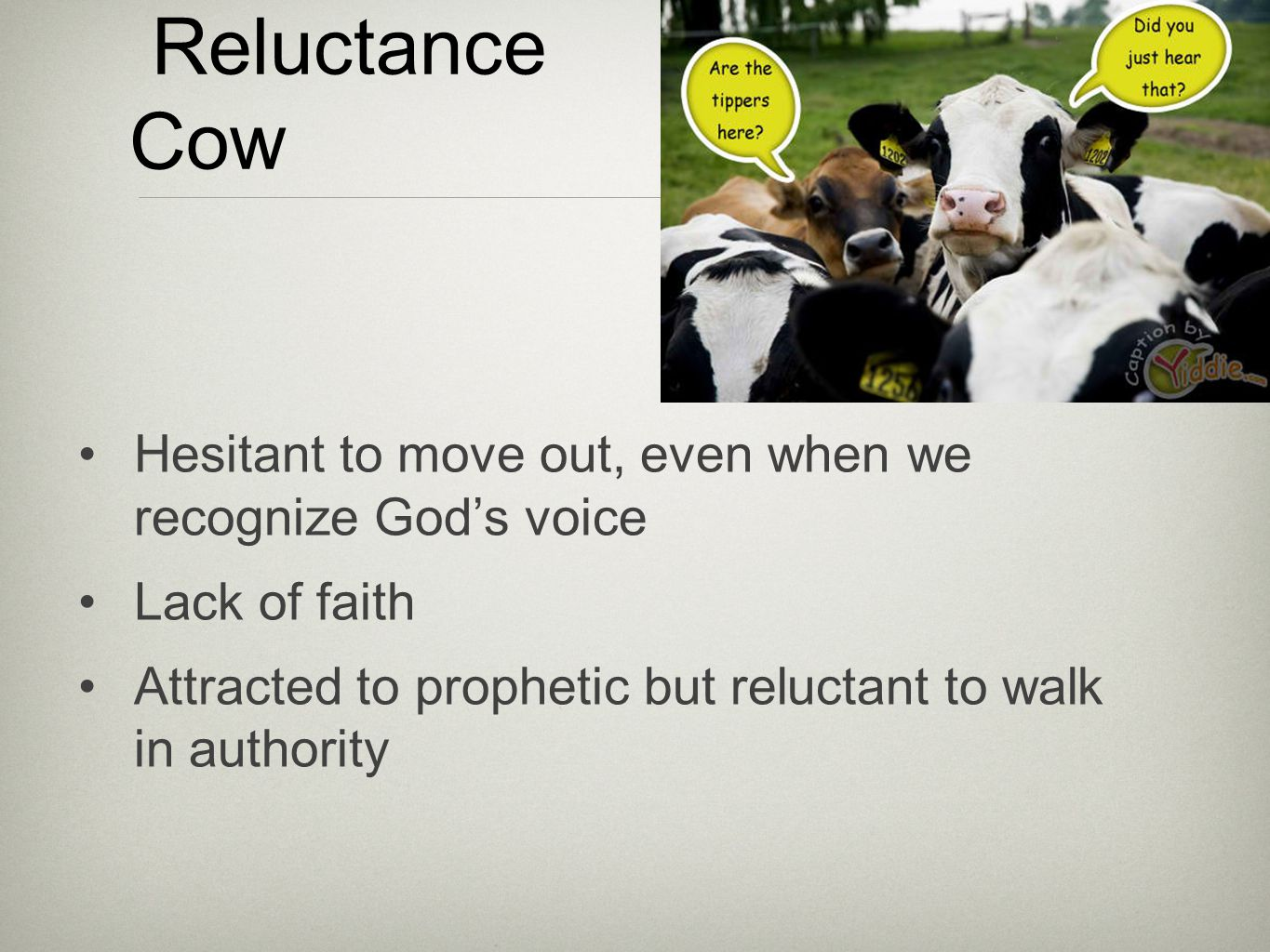 Reluctance Cow Hesitant to move out, even when we recognize God's voice Lack of faith Attracted to prophetic but reluctant to walk in authority