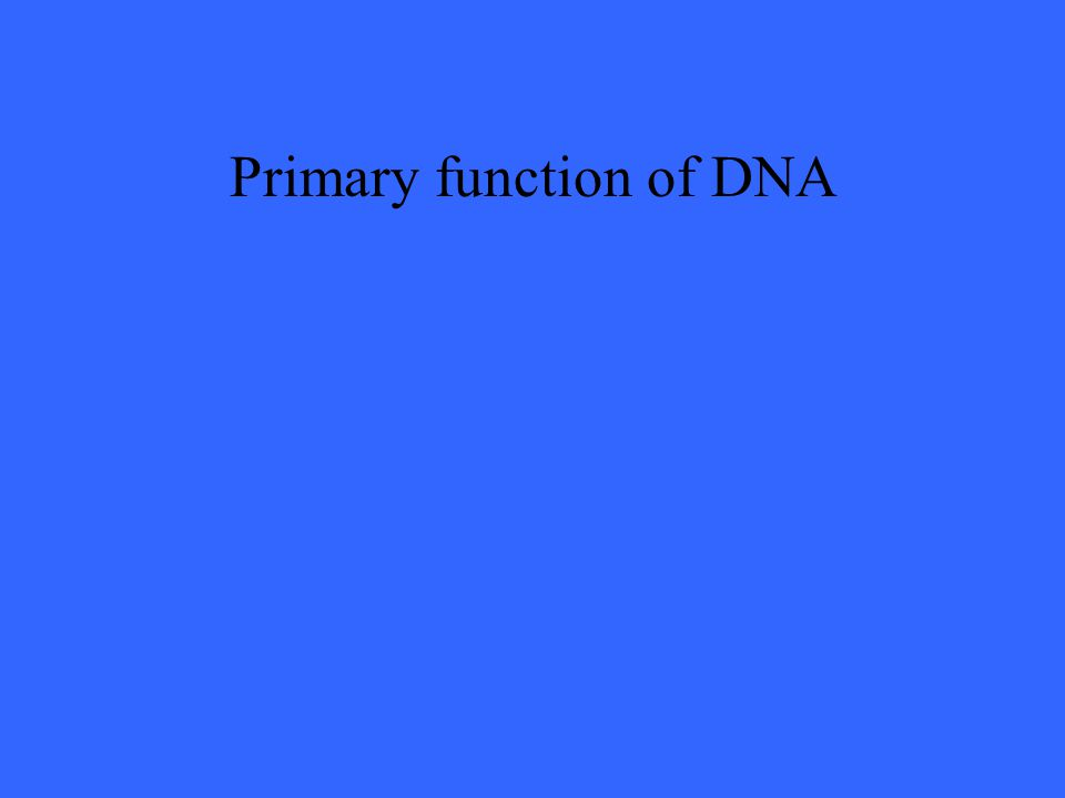 Primary function of DNA
