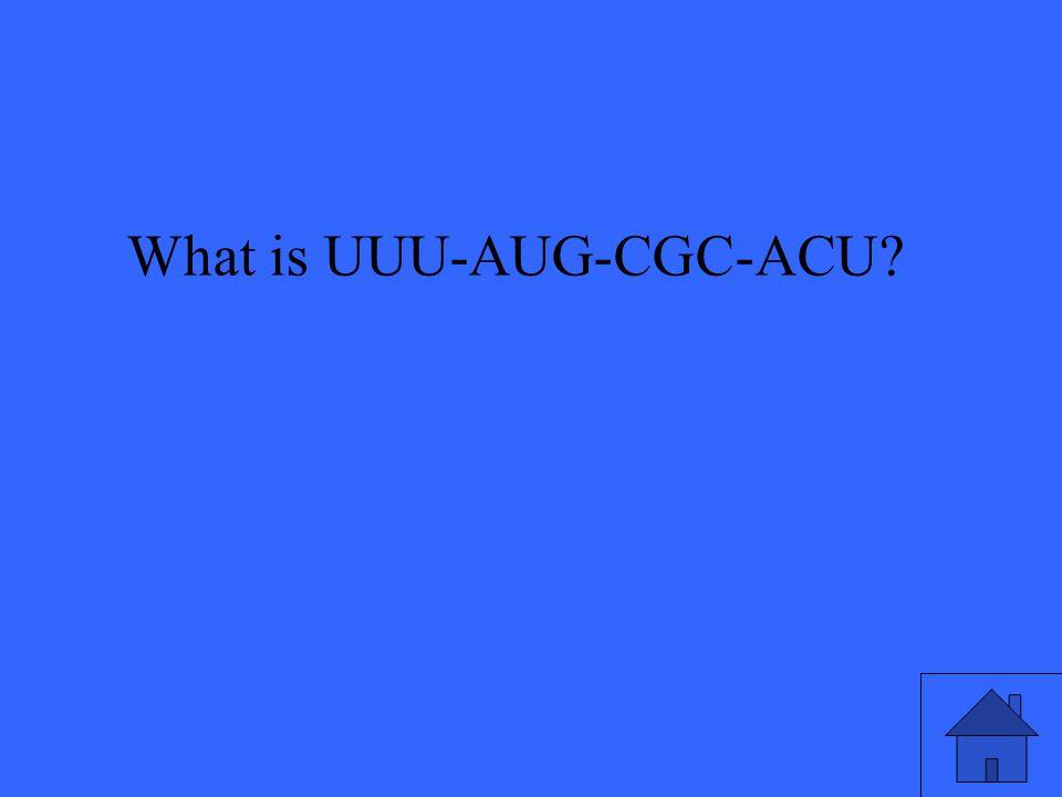 What is UUU-AUG-CGC-ACU?